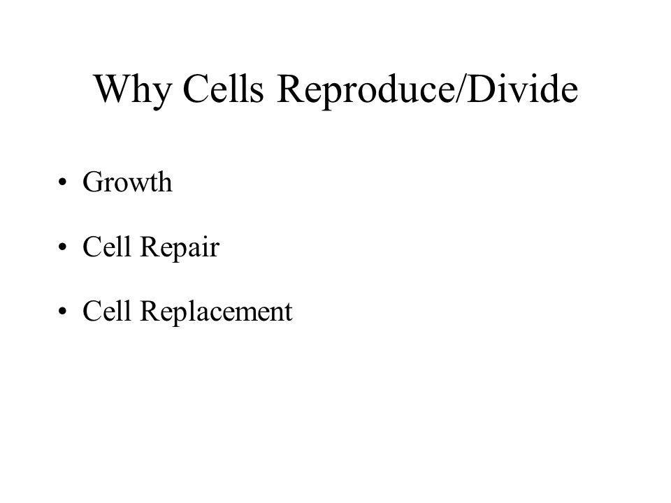 Why do cells multiply and not just grow bigger.