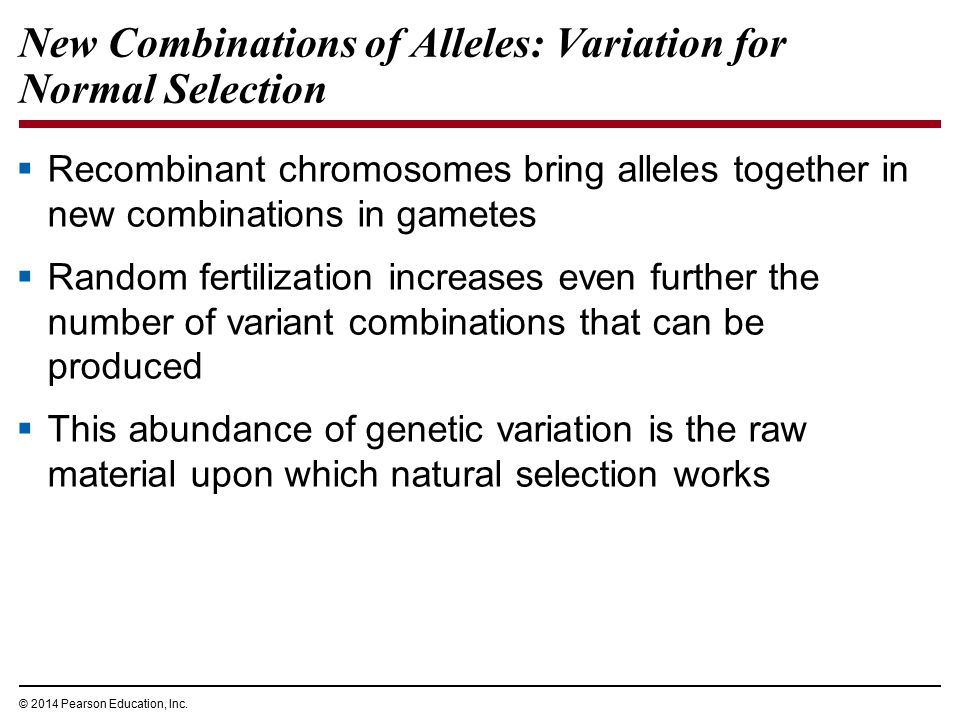 © 2014 Pearson Education, Inc. New Combinations of Alleles: Variation for Normal Selection  Recombinant chromosomes bring alleles together in new com