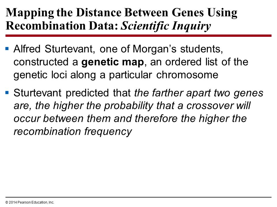 © 2014 Pearson Education, Inc. Mapping the Distance Between Genes Using Recombination Data: Scientific Inquiry  Alfred Sturtevant, one of Morgan's st