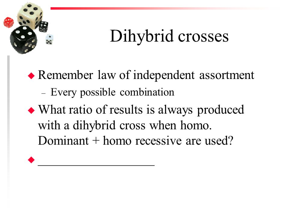 Dihybrid crosses u Remember law of independent assortment – Every possible combination u What ratio of results is always produced with a dihybrid cros