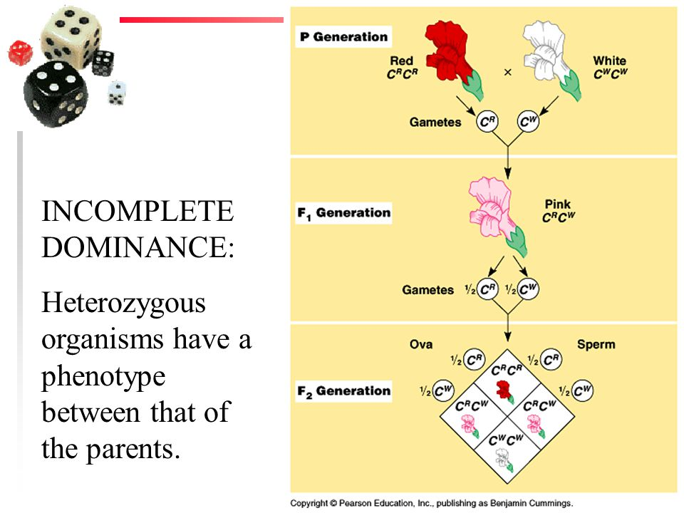 INCOMPLETE DOMINANCE: Heterozygous organisms have a phenotype between that of the parents.