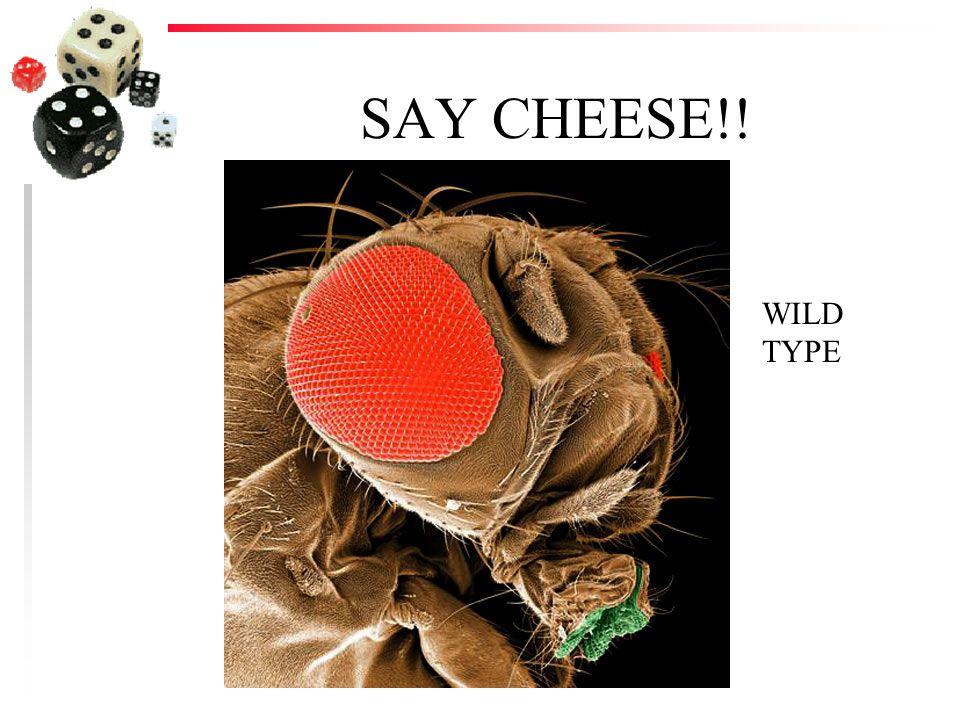 SAY CHEESE!! WILD TYPE