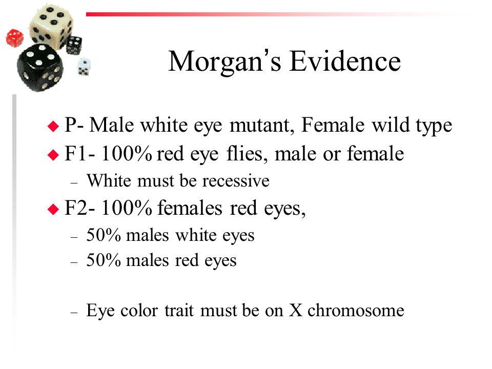 Morgan's Evidence u P- Male white eye mutant, Female wild type u F1- 100% red eye flies, male or female – White must be recessive u F2- 100% females r