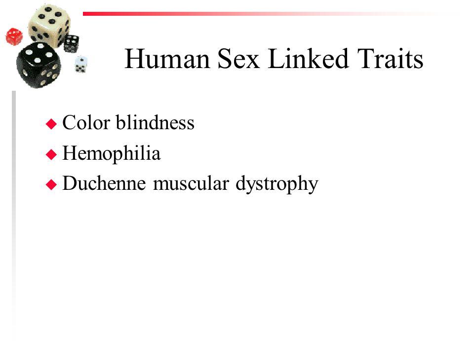 Human Sex Linked Traits u Color blindness u Hemophilia u Duchenne muscular dystrophy