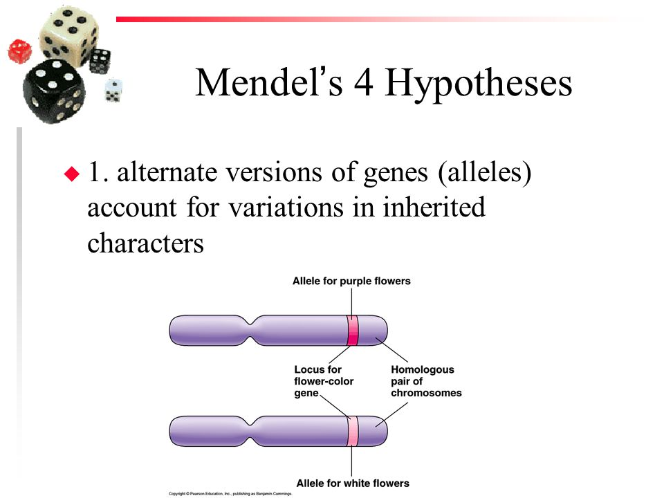 Mendel's 4 Hypotheses u 1. alternate versions of genes (alleles) account for variations in inherited characters
