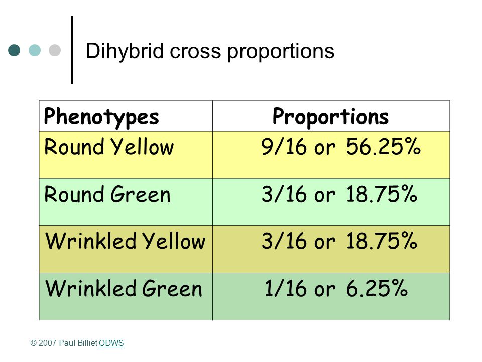 Dihybrid cross proportions PhenotypesProportions Round Yellow9/16 or56.25% Round Green3/16 or18.75% Wrinkled Yellow3/16 or18.75% Wrinkled Green1/16 or