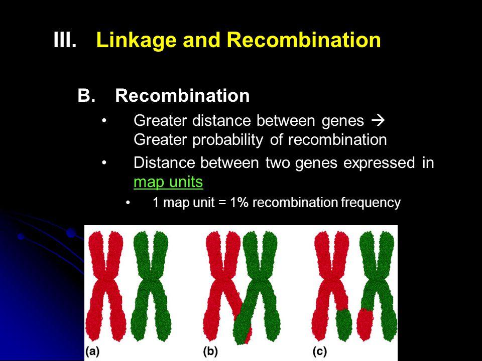 III. III.Linkage and Recombination B.