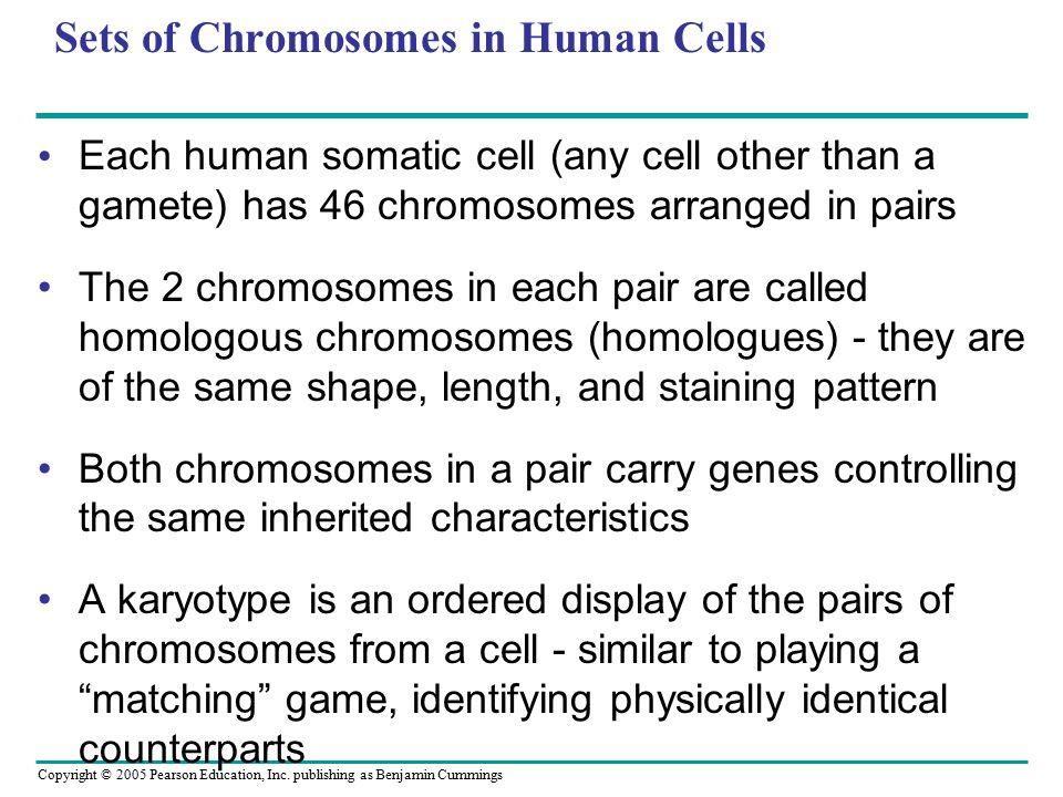 Copyright © 2005 Pearson Education, Inc. publishing as Benjamin Cummings Sets of Chromosomes in Human Cells Each human somatic cell (any cell other th