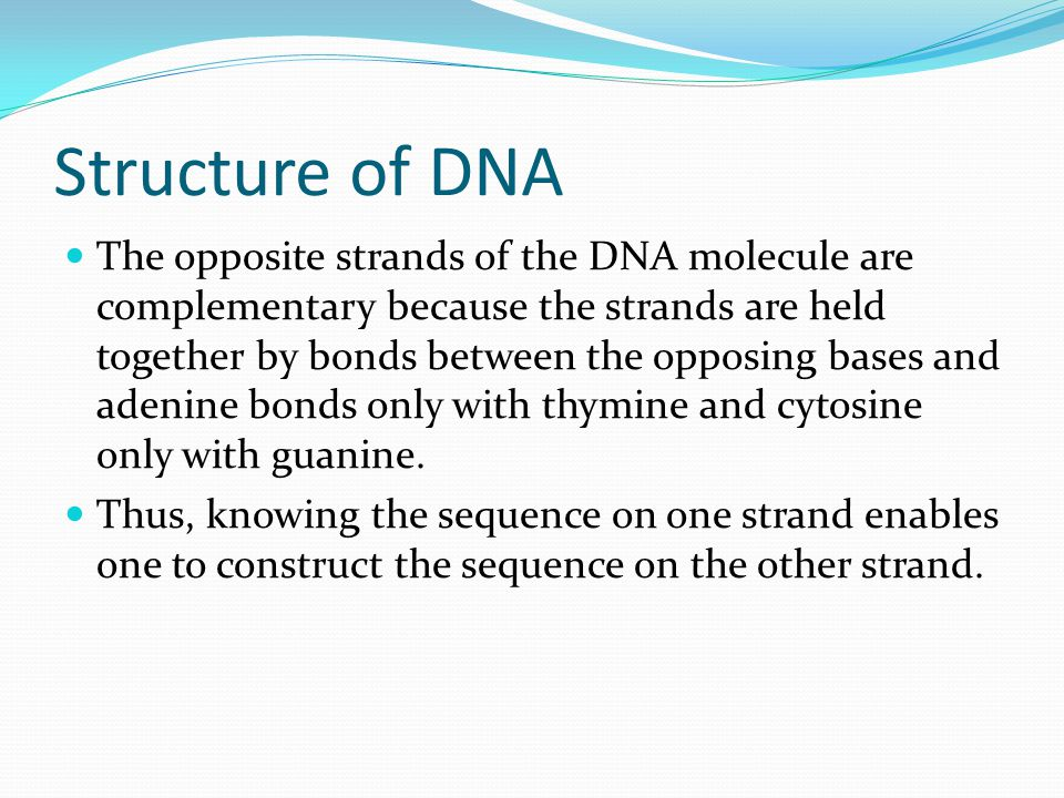 Structure of DNA The opposite strands of the DNA molecule are complementary because the strands are held together by bonds between the opposing bases and adenine bonds only with thymine and cytosine only with guanine.