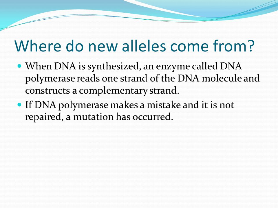 Where do new alleles come from? When DNA is synthesized, an enzyme called DNA polymerase reads one strand of the DNA molecule and constructs a complem