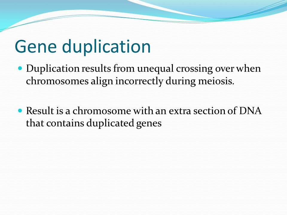 Gene duplication Duplication results from unequal crossing over when chromosomes align incorrectly during meiosis. Result is a chromosome with an extr