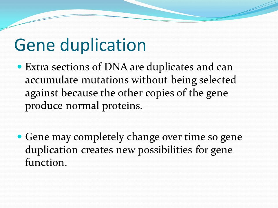 Gene duplication Extra sections of DNA are duplicates and can accumulate mutations without being selected against because the other copies of the gene