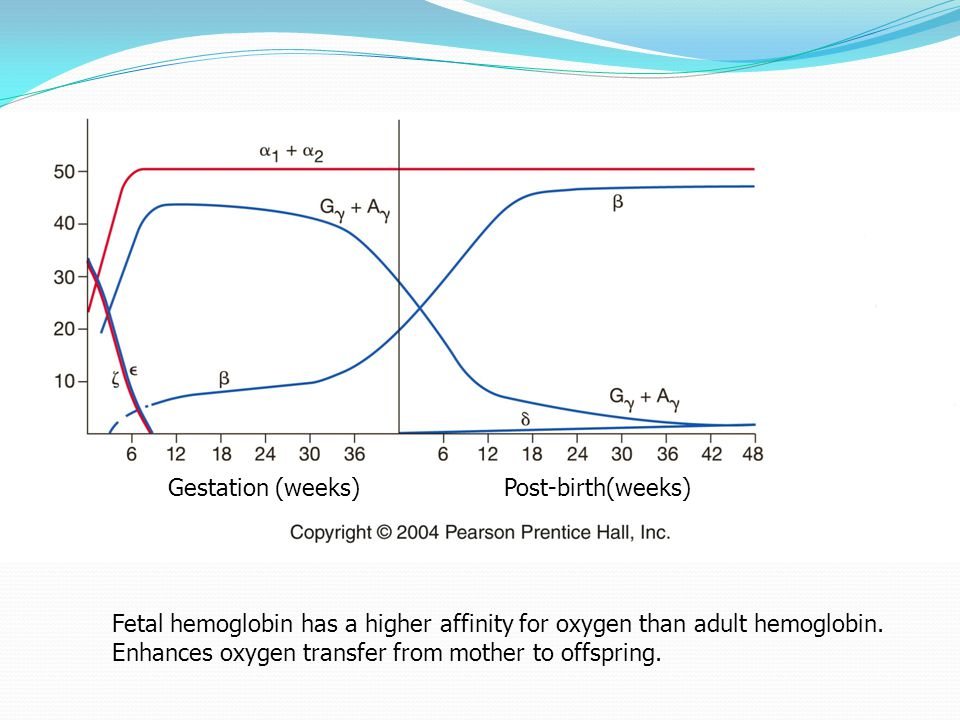 4.8 Gestation (weeks)Post-birth(weeks) Fetal hemoglobin has a higher affinity for oxygen than adult hemoglobin. Enhances oxygen transfer from mother t
