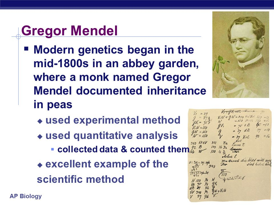 AP Biology Gregor Mendel  Modern genetics began in the mid-1800s in an abbey garden, where a monk named Gregor Mendel documented inheritance in peas  used experimental method  used quantitative analysis  collected data & counted them  excellent example of the scientific method