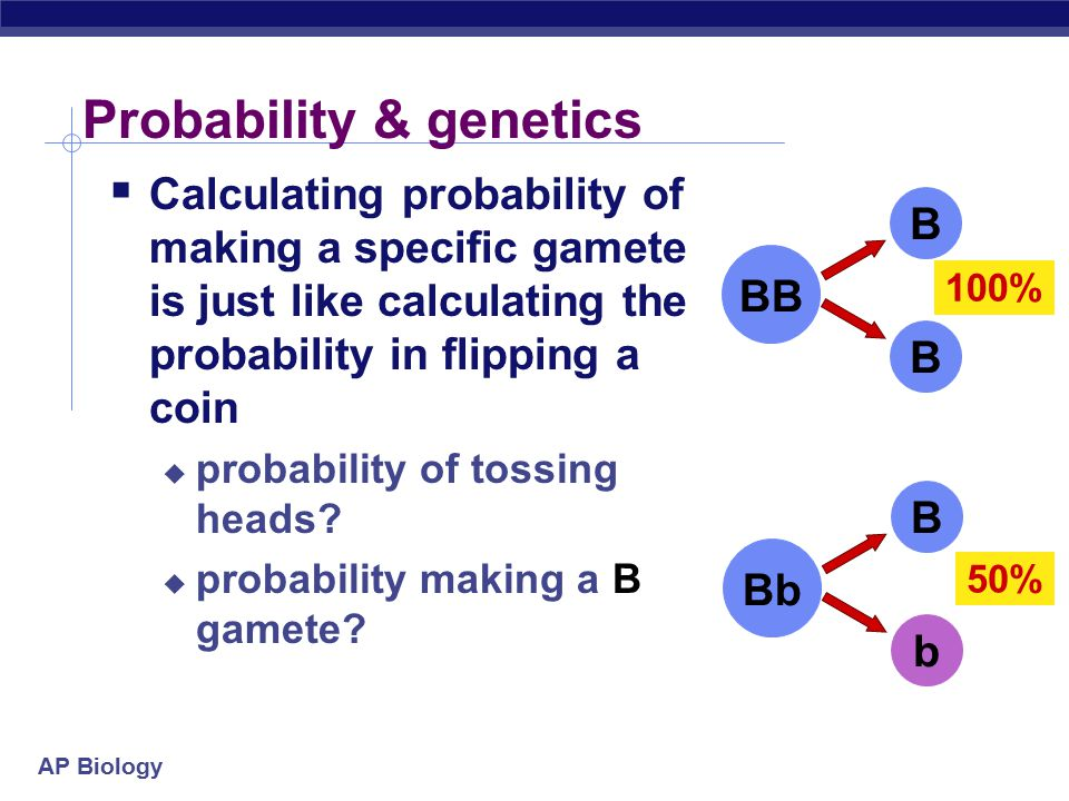 AP Biology Genetics & Probability  Mendel's laws:  segregation  independent assortment reflect same laws of probability that apply to tossing coins