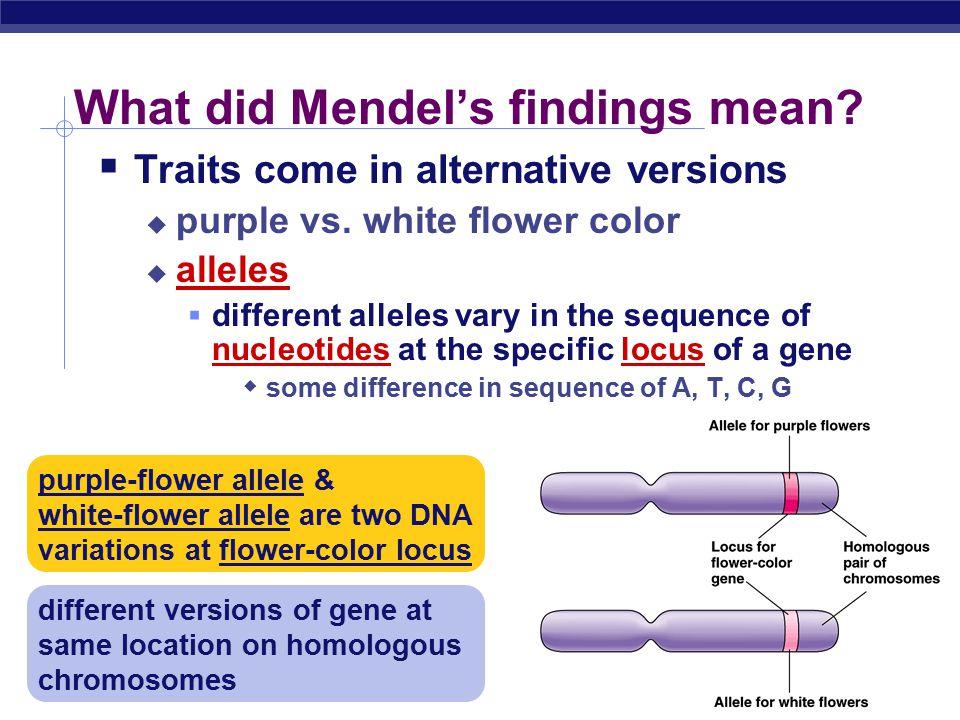 AP Biology What did Mendel's findings mean. Traits come in alternative versions  purple vs.
