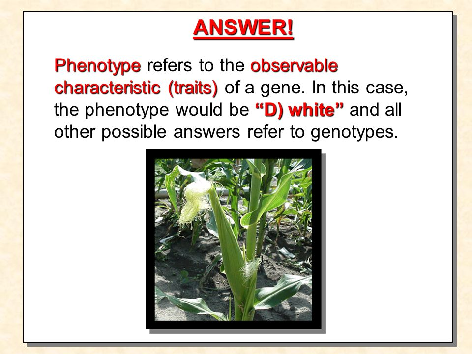Phenotype refers to the observable characteristic (traits) of a gene.