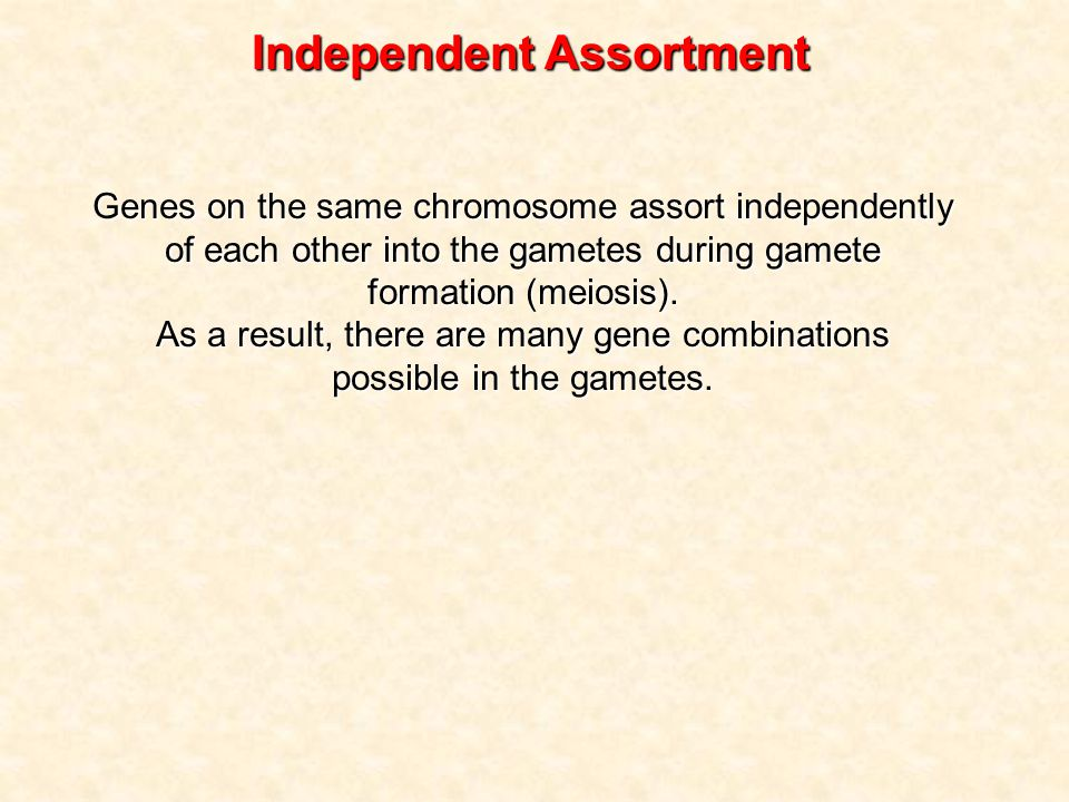 Genes on the same chromosome assort independently of each other into the gametes during gamete formation (meiosis).