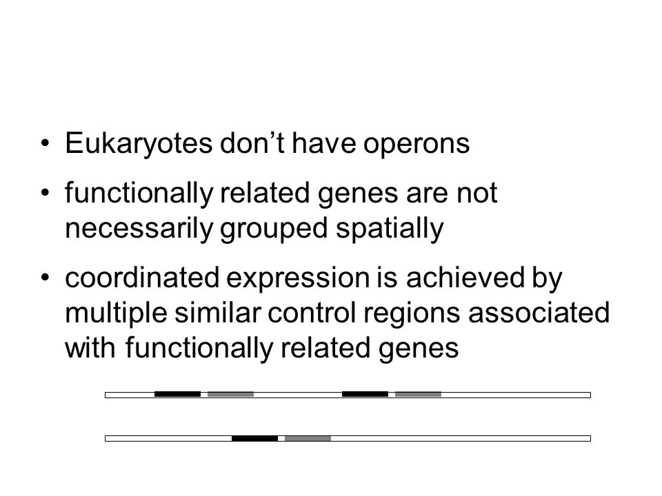 Example: Trp operon Genes for enzymes that synthesize the amino acid tryptophan Regulatory gene makes repressor protein Repressor is activated by binding tryptophan, and blocks transcription by binding operator Negative feedback- shuts down operon if there is plenty of tryptophan present