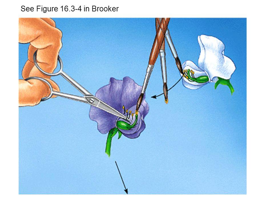 See Figure 16.3-4 in Brooker