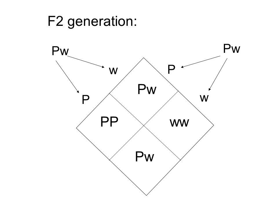 w P Pw P w PPww Pw F2 generation: