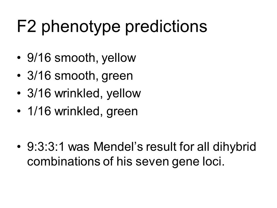 F2 phenotype predictions 9/16 smooth, yellow 3/16 smooth, green 3/16 wrinkled, yellow 1/16 wrinkled, green 9:3:3:1 was Mendel's result for all dihybrid combinations of his seven gene loci.