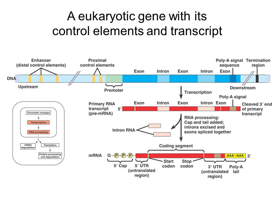 2.Control of Transcription (Fig.