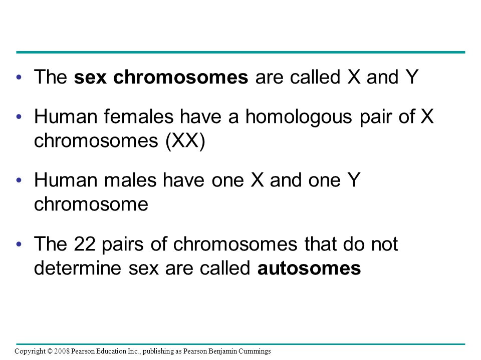 The sex chromosomes are called X and Y Human females have a homologous pair of X chromosomes (XX) Human males have one X and one Y chromosome The 22 p
