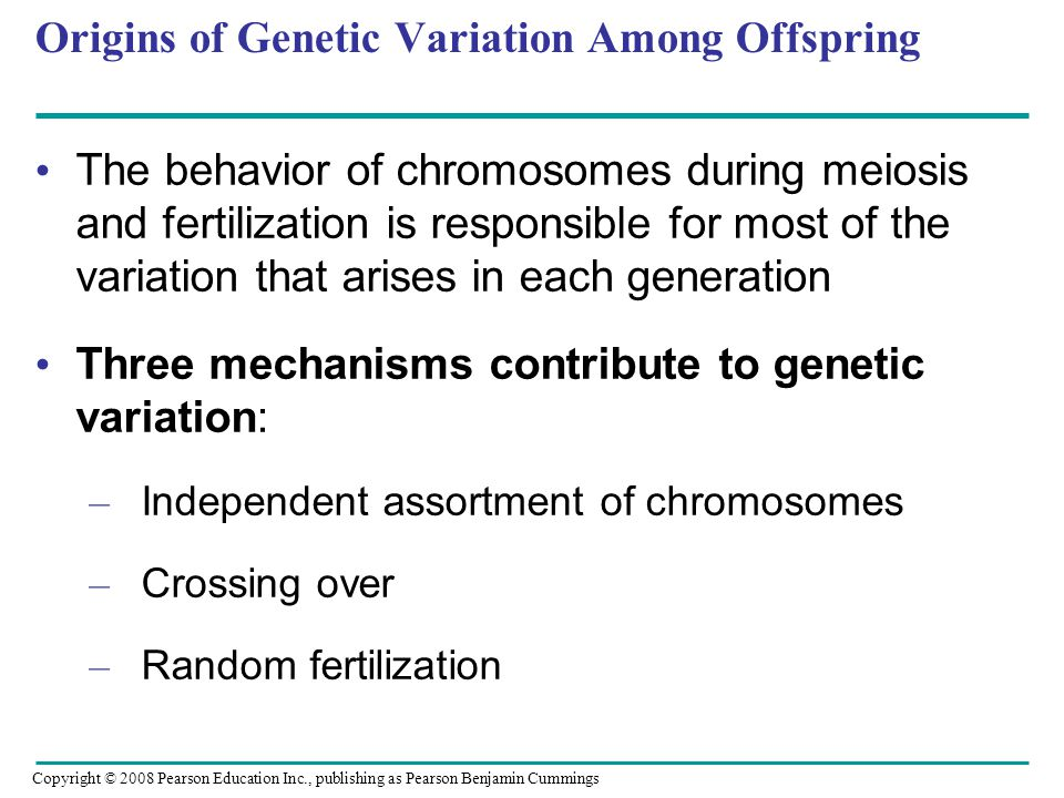 Origins of Genetic Variation Among Offspring The behavior of chromosomes during meiosis and fertilization is responsible for most of the variation tha