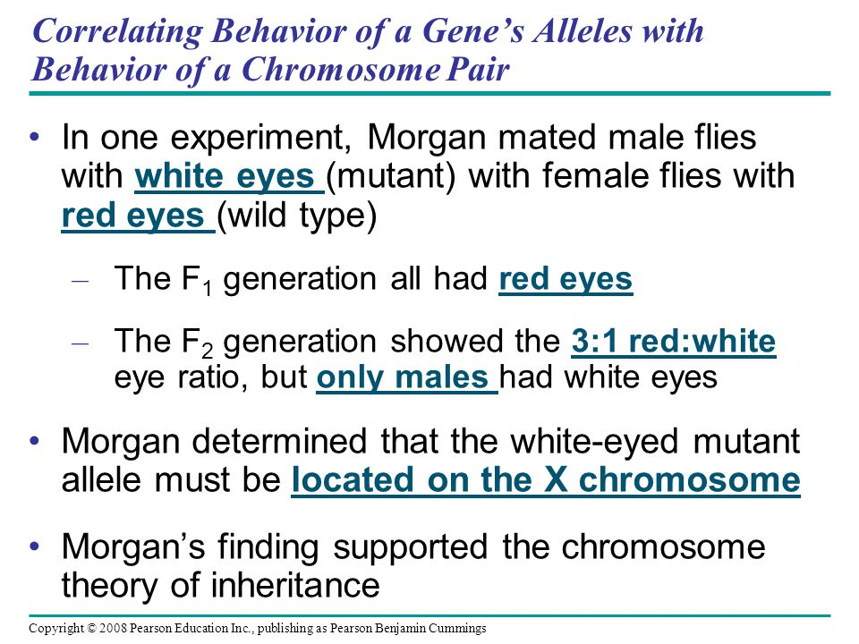 Correlating Behavior of a Gene's Alleles with Behavior of a Chromosome Pair In one experiment, Morgan mated male flies with white eyes (mutant) with f