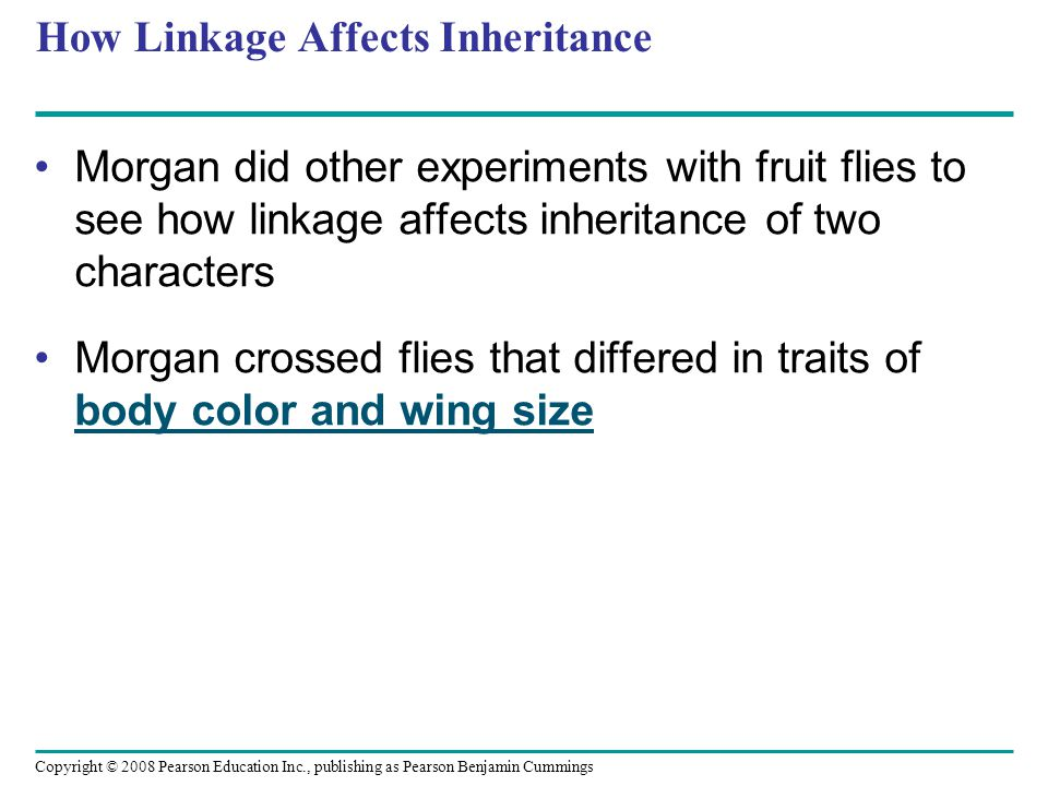 How Linkage Affects Inheritance Morgan did other experiments with fruit flies to see how linkage affects inheritance of two characters Morgan crossed