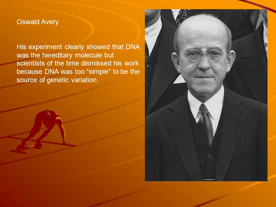 Oswald Avery His experiment clearly showed that DNA was the hereditary molecule but scientists of the time dismissed his work because DNA was too simple to be the source of genetic variation.