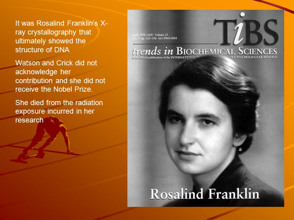 It was Rosalind Franklin's X- ray crystallography that ultimately showed the structure of DNA Watson and Crick did not acknowledge her contribution and she did not receive the Nobel Prize.