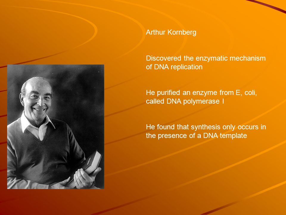 Arthur Kornberg Discovered the enzymatic mechanism of DNA replication He purified an enzyme from E, coli, called DNA polymerase I He found that synthesis only occurs in the presence of a DNA template