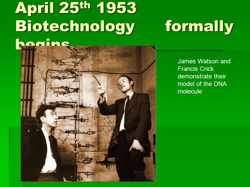 April 25 th 1953 Biotechnology formally begins James Watson and Francis Crick demonstrate their model of the DNA molecule
