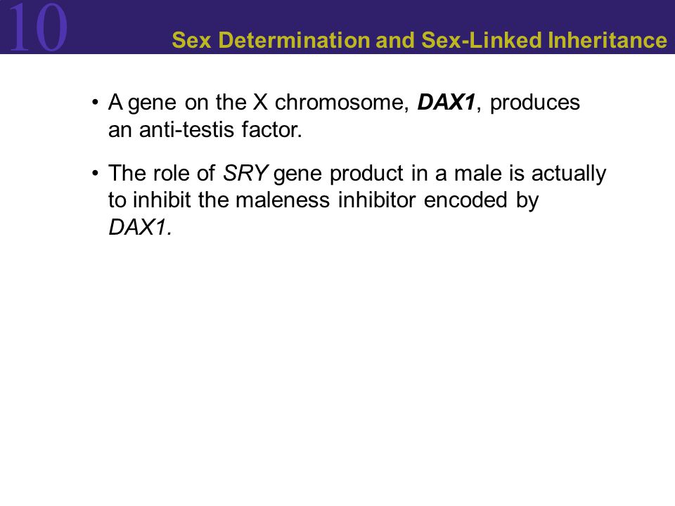 10 Sex Determination and Sex-Linked Inheritance A gene on the X chromosome, DAX1, produces an anti-testis factor.