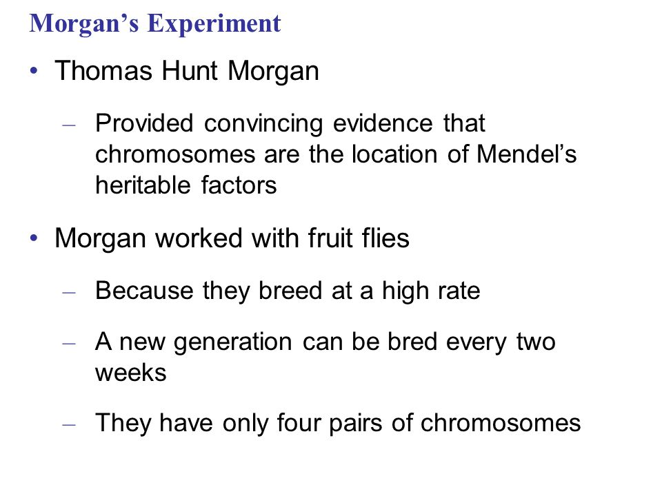 Morgan's Experiment Thomas Hunt Morgan – Provided convincing evidence that chromosomes are the location of Mendel's heritable factors Morgan worked wi