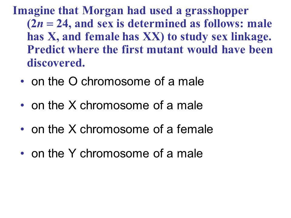 Imagine that Morgan had used a grasshopper (2n  24, and sex is determined as follows: male has X, and female has XX) to study sex linkage. Predict wh