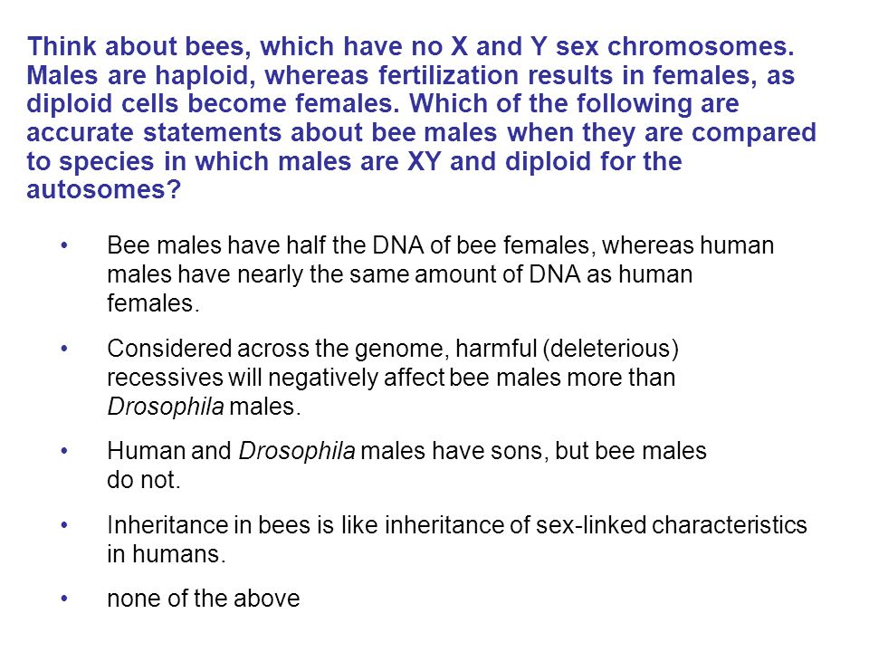 Think about bees, which have no X and Y sex chromosomes. Males are haploid, whereas fertilization results in females, as diploid cells become females.