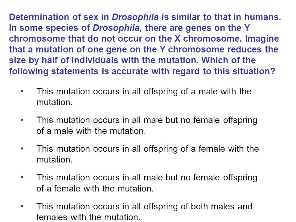 Determination of sex in Drosophila is similar to that in humans. In some species of Drosophila, there are genes on the Y chromosome that do not occur