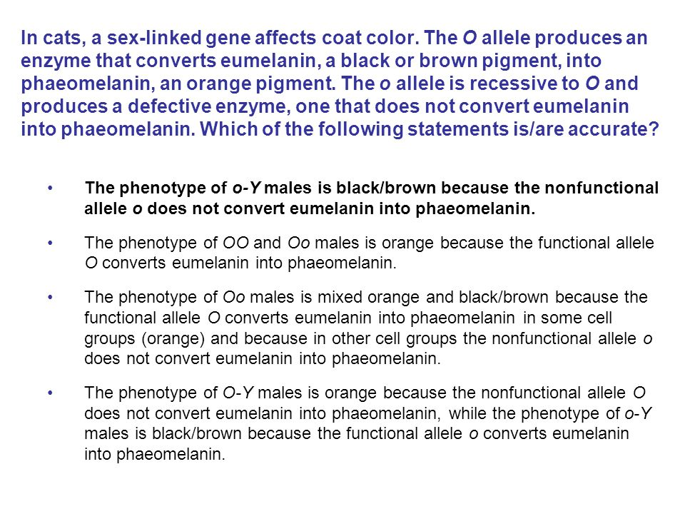 In cats, a sex-linked gene affects coat color. The O allele produces an enzyme that converts eumelanin, a black or brown pigment, into phaeomelanin, a