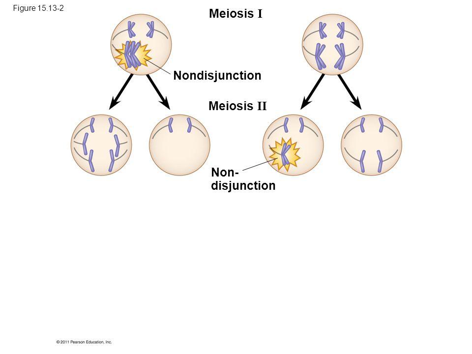 Meiosis I Meiosis II Nondisjunction Non- disjunction Figure 15.13-2