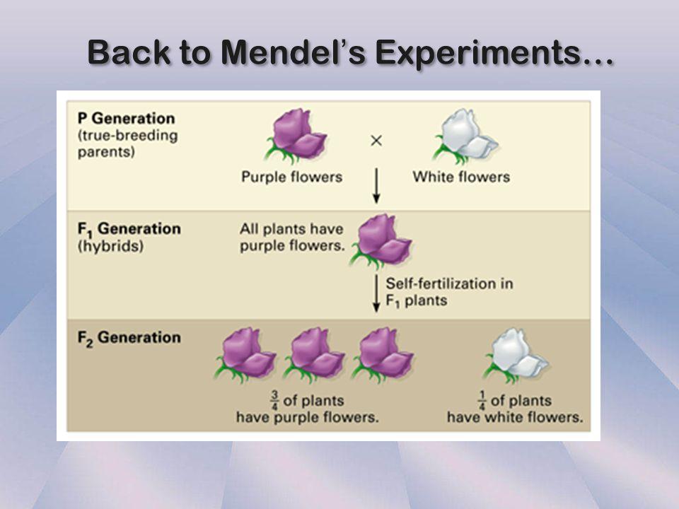 C. Mendel's Principles 1.Principle of Dominance 2.Principle of Segregation 3.Principle of Independent Assortment 1.Principle of Dominance 2.Principle