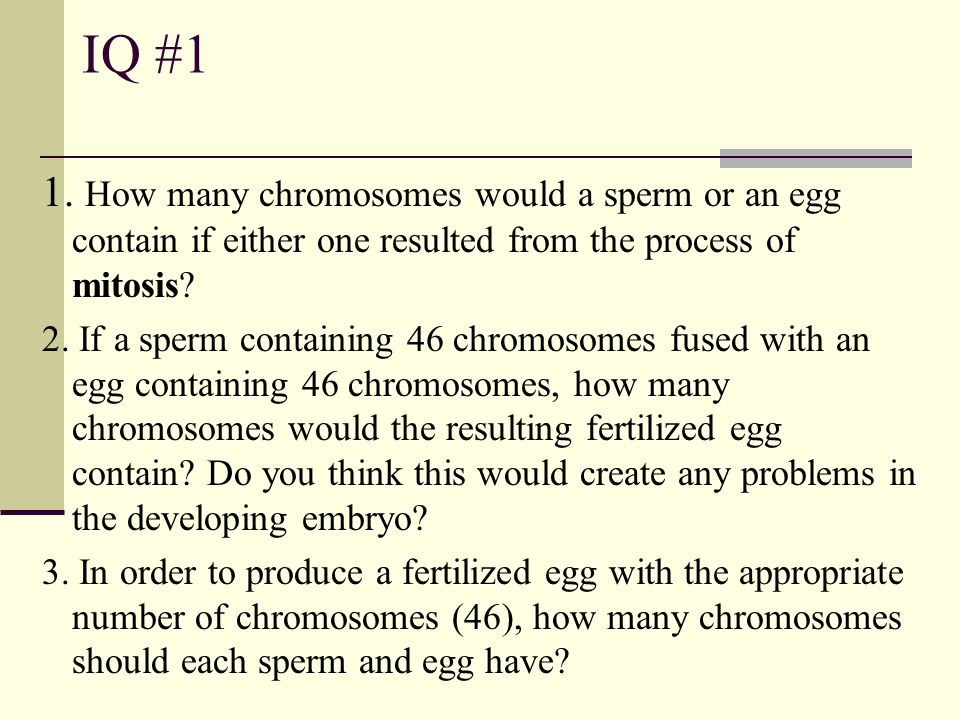 IQ #1 1. How many chromosomes would a sperm or an egg contain if either one resulted from the process of mitosis? 2. If a sperm containing 46 chromoso
