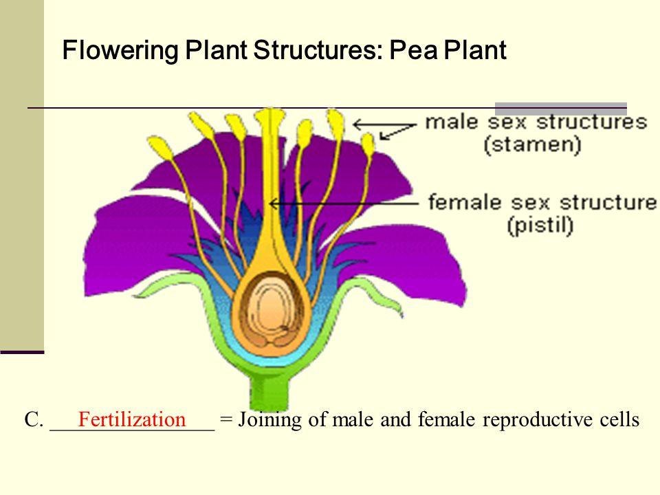 Flowering Plant Structures: Pea Plant C.