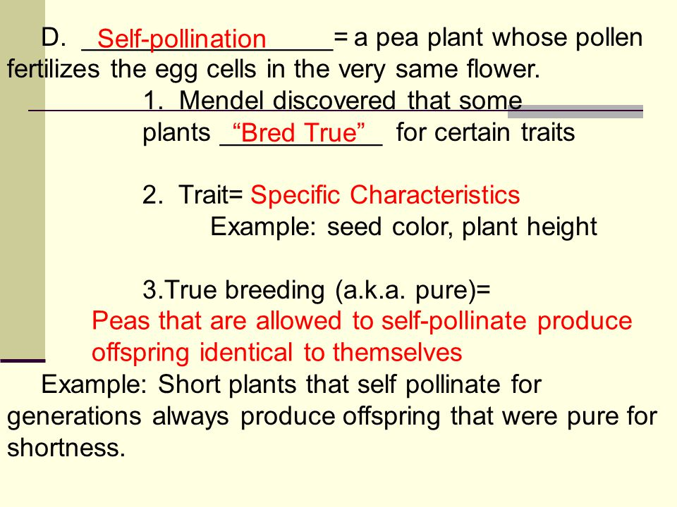 D._________________= a pea plant whose pollen fertilizes the egg cells in the very same flower.