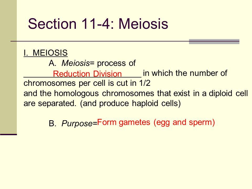Section 11-4: Meiosis I.MEIOSIS A.