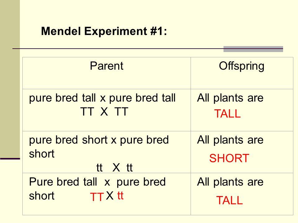 ParentOffspring pure bred tall x pure bred tall TT X TT All plants are pure bred short x pure bred short tt X tt All plants are Pure bred tall x pure bred short X All plants are Mendel Experiment #1: TALL SHORT TT tt TALL