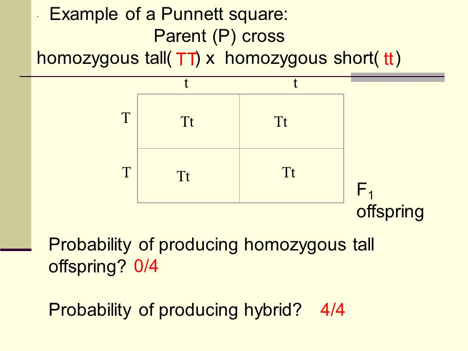 · Example of a Punnett square: Parent (P) cross homozygous tall( ) x homozygous short( ) Probability of producing homozygous tall offspring? Probabili