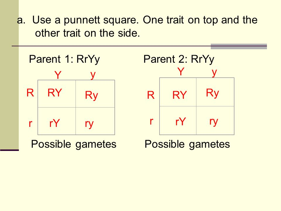 a. Use a punnett square. One trait on top and the other trait on the side. Parent 1: RrYyParent 2: RrYy Possible gametes Ry RY ryrY ry rY Ry RY r R y